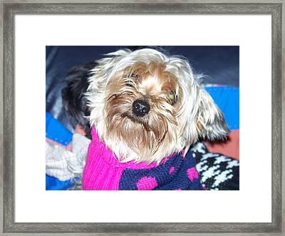 Jojo Framed Print by Regina McLeroy