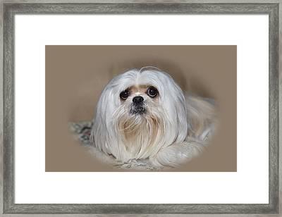 Joliedog5vigbeige Framed Print by Cecil Fuselier