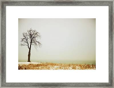Jordan, Ontario, Canada A Tree Along Framed Print by Pete Stec