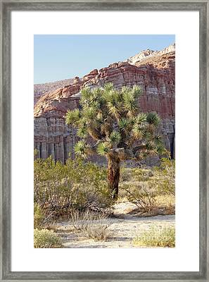 Joshua And Red Rock Framed Print by Ivete Basso Photography