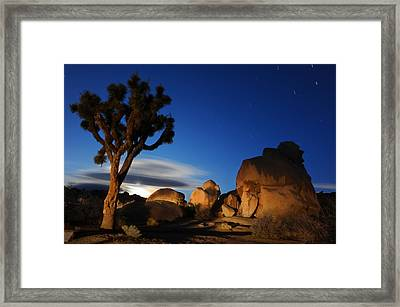 Joshua Tree At Night Framed Print by Dung Ma