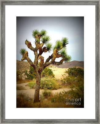 Framed Print featuring the photograph Joshua Tree by Jim McCain