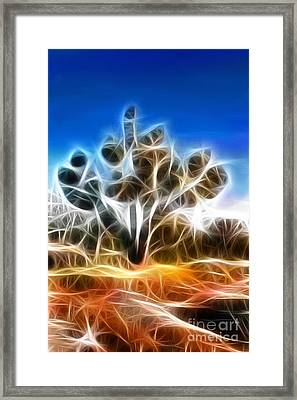 Joshua Tree Framed Print by Methune Hively