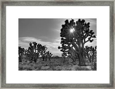 Joshua Tree National Preserve Framed Print by Eddie Yerkish