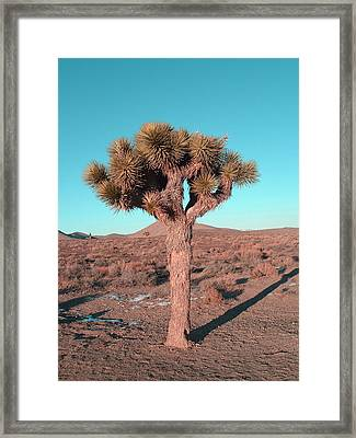 Joshua Tree Framed Print by Naxart Studio