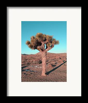 Anza Borrego Framed Prints