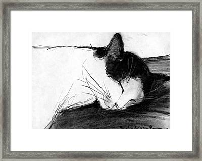 Joujou 1 Framed Print by Mona Edulesco