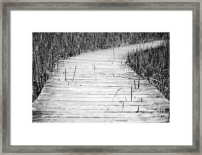 Journey Of Soles Framed Print by Luke Moore