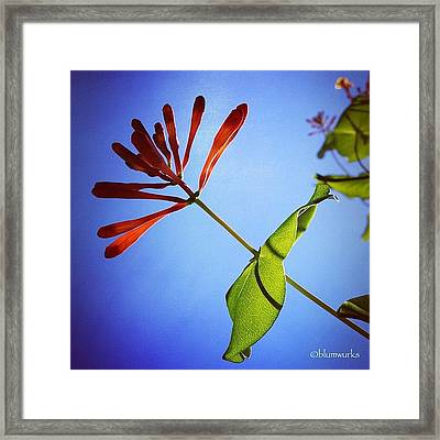 Journey To Perfection Framed Print
