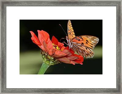 Jovial Jeromme....... Framed Print by Tanya Tanski