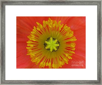 Framed Print featuring the photograph Joyful by Tina Marie