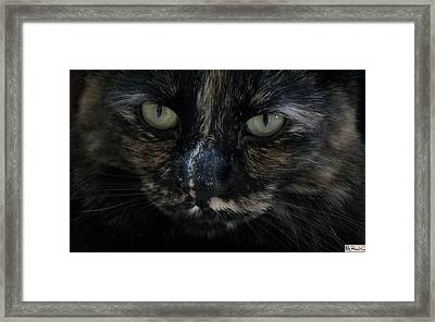 Judy Framed Print by Paula Greenlee