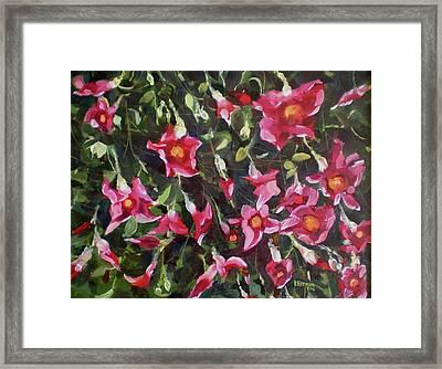 Judys Bouganvillias Framed Print