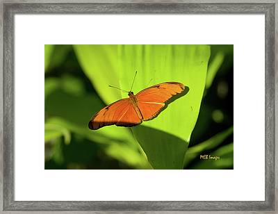 Julia Butterfly Framed Print by Margaret Buchanan