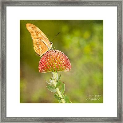 Julia Longwing Butterfly On Exotic Flower Framed Print