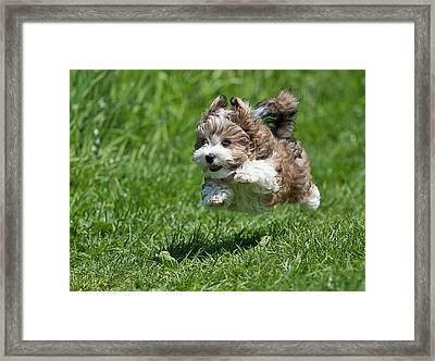 Jumping Puppy Framed Print by @Hans Surfer
