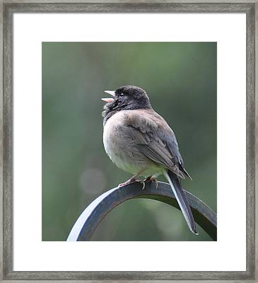 Framed Print featuring the photograph Junco Sings by Ronda Broatch