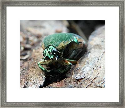 Framed Print featuring the photograph June Bug Shine by Chad and Stacey Hall