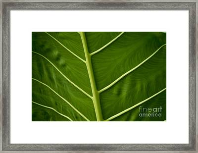 Jungle Leaf Framed Print