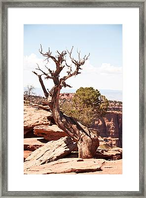 Juniper - Colorado National Monument Framed Print by Bob and Nancy Kendrick