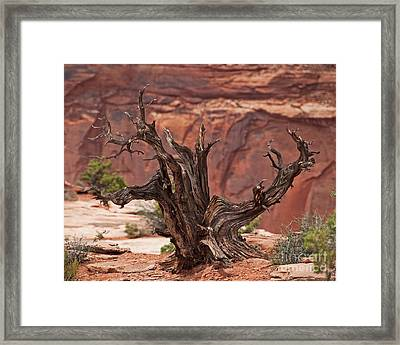 Juniper At Canyonlands Framed Print by Bob and Nancy Kendrick