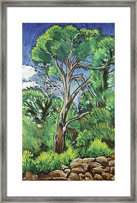 Juniper At The Ruins Framed Print