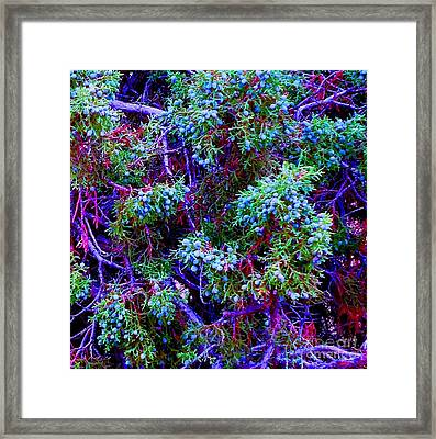 Framed Print featuring the photograph Juniper Neurons by Ann Johndro-Collins