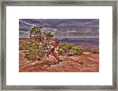 Junipers Storm Framed Print by John Kelly