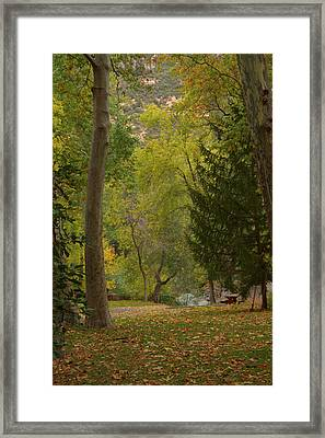 Framed Print featuring the photograph Junipine by Tom Kelly