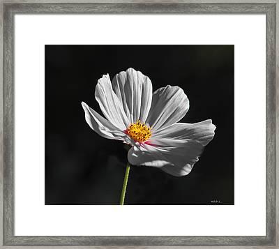 Just A Flower Framed Print by Mitch Shindelbower