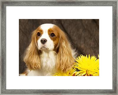Just A Girl And A Flower Framed Print by Daphne Sampson