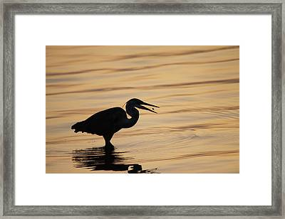 Just A Little Snack For Breakfast Framed Print by Jeanne Andrews
