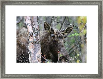 Framed Print featuring the photograph Just A Start by Doug Lloyd