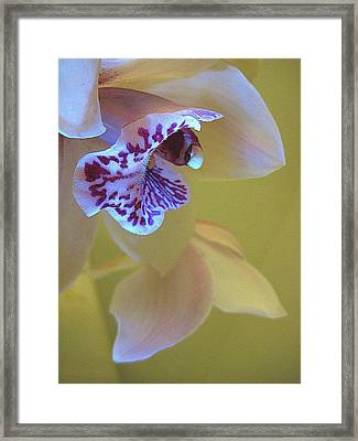 Just Being Here Framed Print by Shirley Sirois