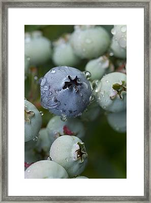Just Blue Framed Print by Carrie Cranwill