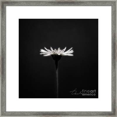 Just Daisy  Framed Print