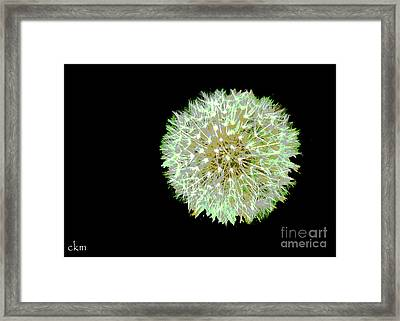 Framed Print featuring the photograph Just Dandy by Cindy Manero