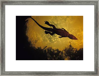Just Days-old, A Nile Crocodile Makes Framed Print by Michael Nichols