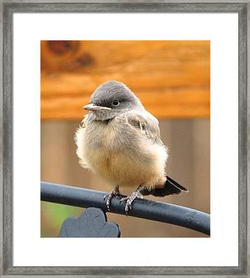 Just Flew The Nest Framed Print by Margaret  Slaugh