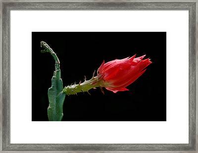 Just Flower Iv Framed Print