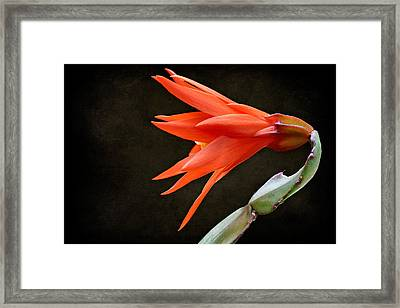 Just Flower V Framed Print
