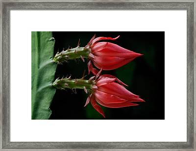 Just Flower Vii Framed Print
