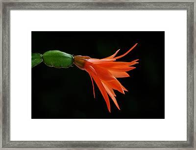 Just Flower Viii Framed Print