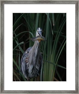 Just For You Framed Print by Ernie Echols