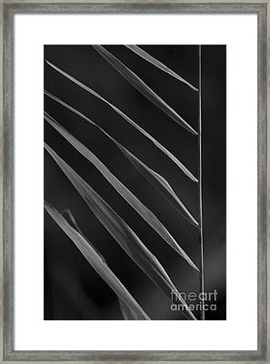 Just Grass Bw Framed Print