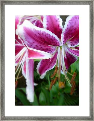 Framed Print featuring the photograph Just Hangin' Around Tiger Lilies by Cindy Wright