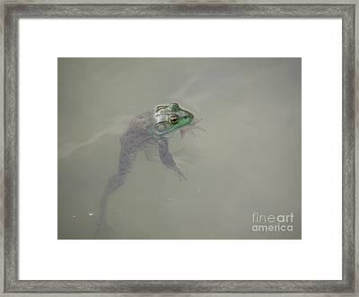 Just Hangin' Framed Print by Linda Seacord