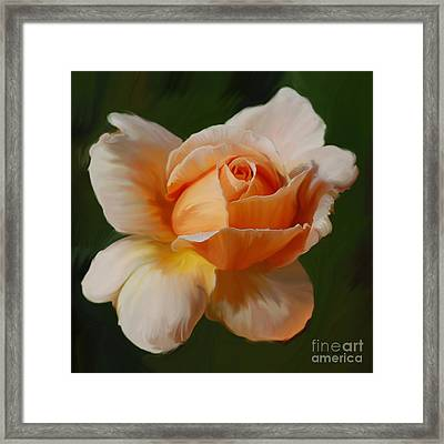 Just Joey Bloom Framed Print by Diane E Berry