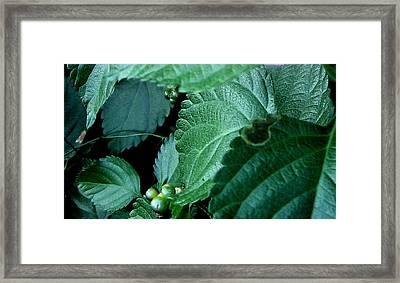 Just Leaves Framed Print by Juliana  Blessington