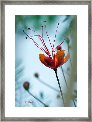 Just Look Up Framed Print